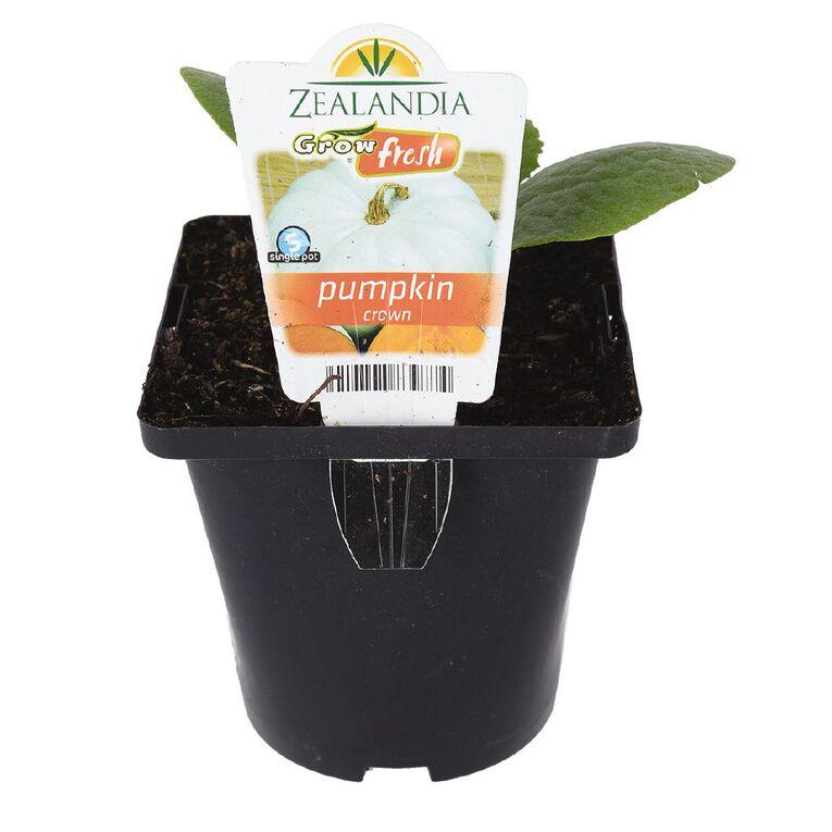 Growfresh Single Pumpkin Crown 10cm Pot, , hi-res