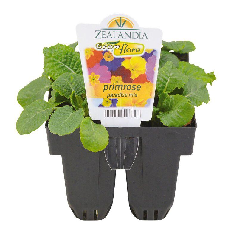 Growflora Primrose Paradise Mix, , hi-res