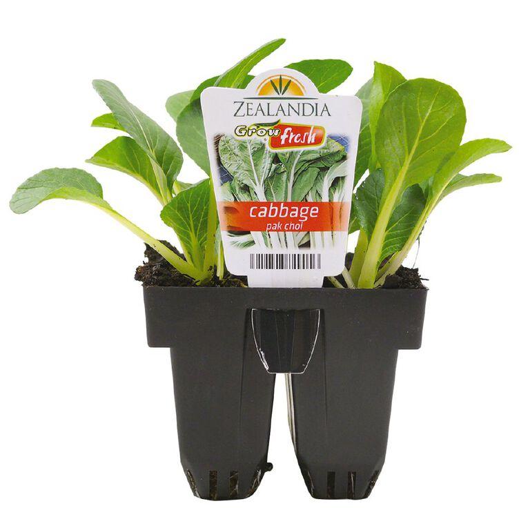 Growfresh Cabbage Pak Choi, , hi-res