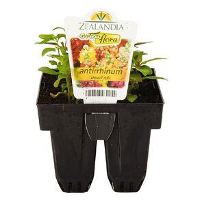 Growflora Antirrhinum Dwarf Mix