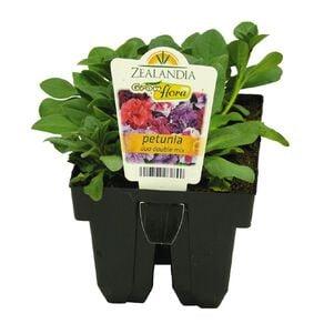 Growflora Petunia Duo Double Mix