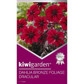 Kiwi Garden Gold Dahlia Bulb Bronze Foliage 1 Pack