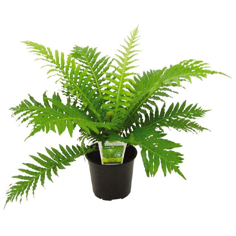 Indoor Foliage Mix Pot 12cm Pot, , hi-res