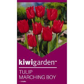 Kiwi Garden Tulip Marching Boy 5PK