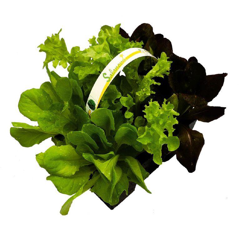 Super Six Salanova Lettuce 6PK, , hi-res