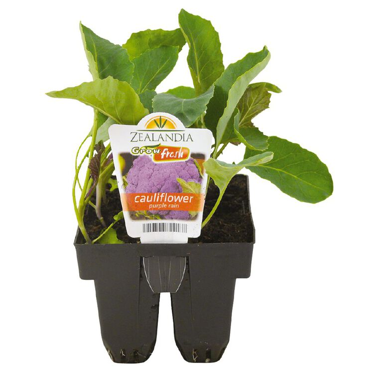 Growfresh Purple Rain Cauliflower, , hi-res