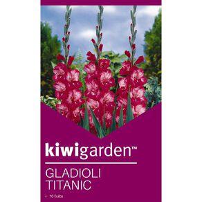 Kiwi Garden Gladioli Titanic 10PK