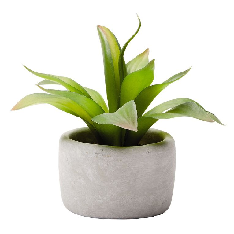 Living & Co Agave Succulent in Concrete Pot 22.8X22.8X20.3CM Grey, , hi-res image number null