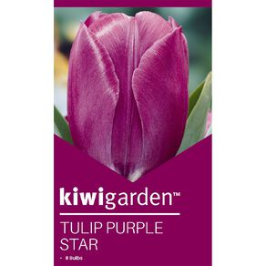 Kiwi Garden Tulip Purple Star 8PK