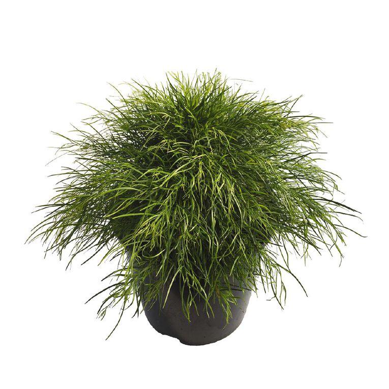Acacia Limelight 2.4L, , hi-res