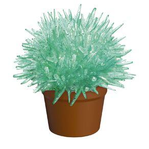 Magical Growing Cactus Growing Kit