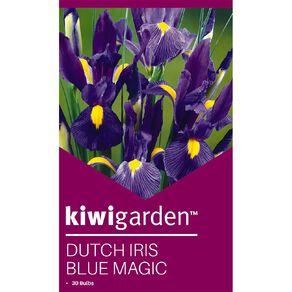 Kiwi Garden Dutch Iris Blue Magic 30PK