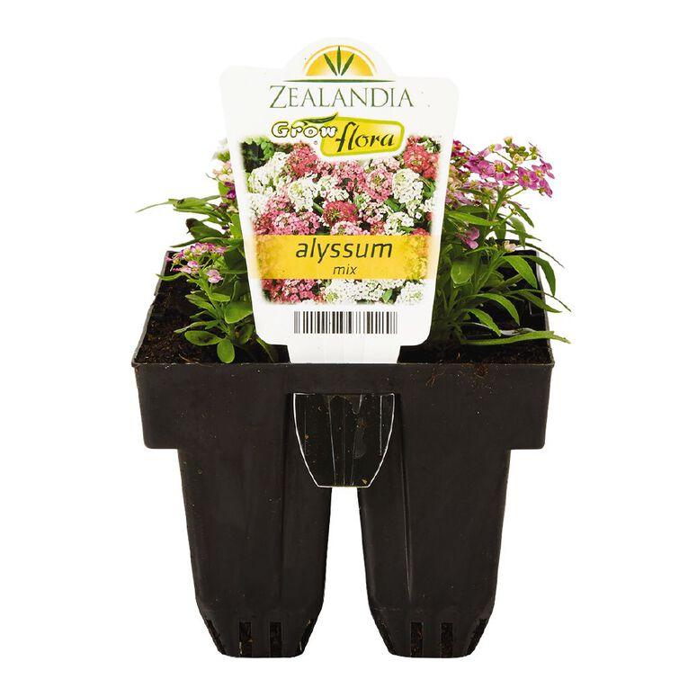 Growflora Alyssum Mix, , hi-res