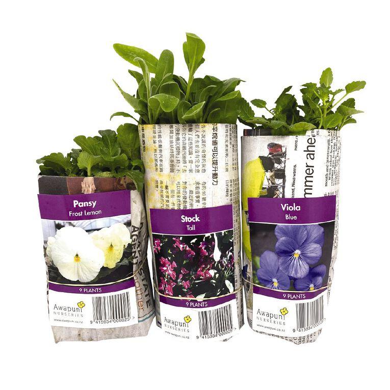 Bedding Plants Assorted 10CM, , hi-res
