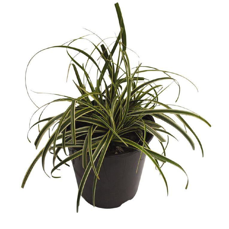 Carex Featherfalls 1.9L Pot, , hi-res