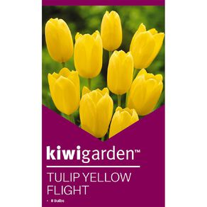 Kiwi Garden Tulip Yellow Flight 8PK