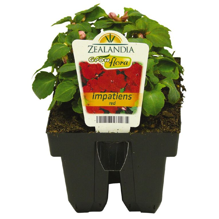 Growflora Impatiens Impulse Red, , hi-res