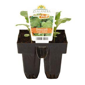 Growfresh Broccoli Green Midget