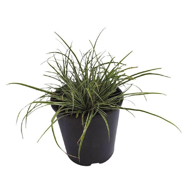 Carex Everest 1.9L Pot, , hi-res